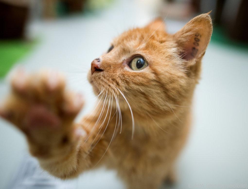 Eppan: Weitere tote Katzen gefunden