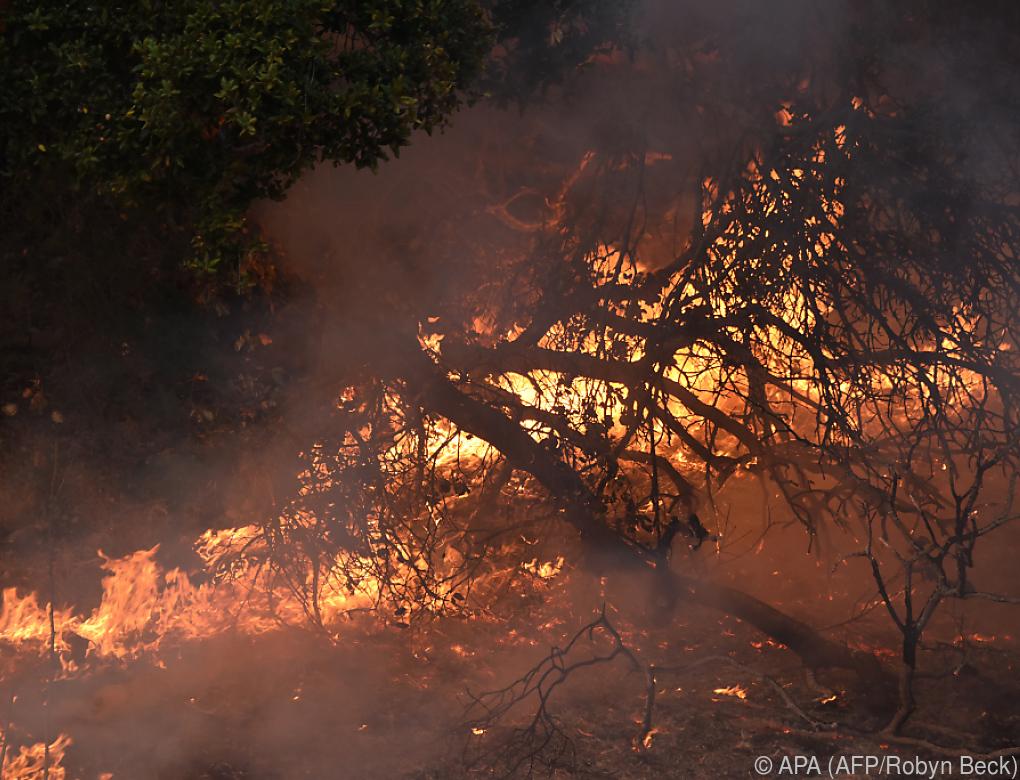 29 Tote bei Bränden in Kalifornien – Suche nach Opfern