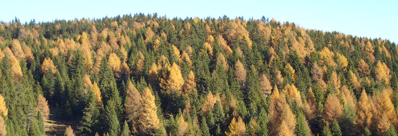 Forsttagsatzungen im Inspektorat Meran